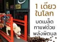 1 เดียวในโลก บดเมล็ดกาแฟด้วย พลังพิตบูล