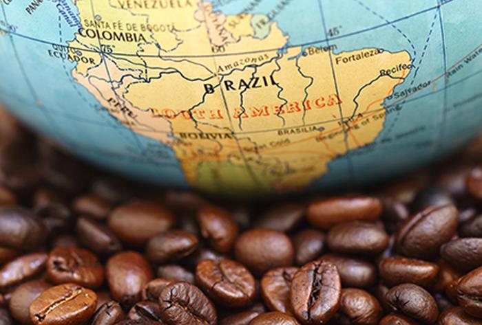 กาแฟบราซิล ซานโตส Brazillian santos coffee bean